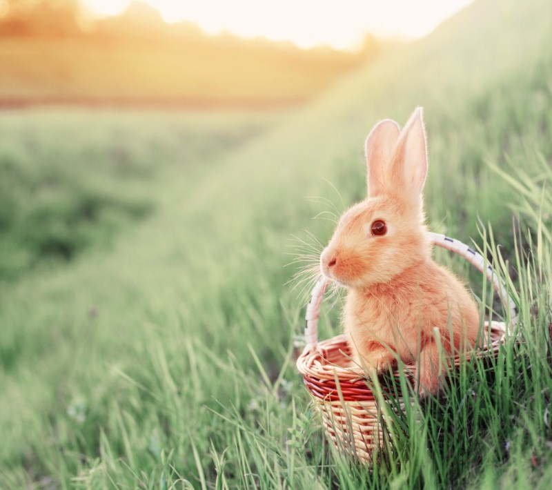 Alternative ways and places to spend Easter 2017